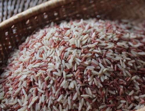 米でつながるアジア